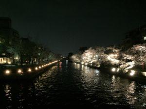 岡崎疎水 桜 ライトアップ