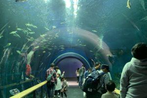 琵琶湖博物館 トンネル水槽
